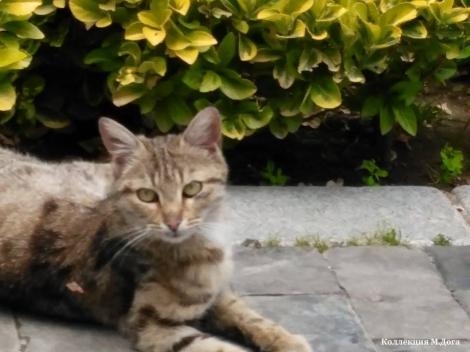 Кот по имени Фистык, живет на улице Искусства в Анкаре