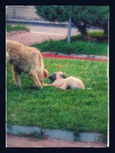 Бездомная собака усыновила щенка,покинотого людьми