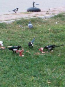 Птицы глодают кости. Почти как собаки.